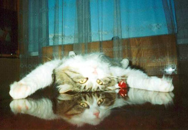 http://www.citycat.ru/cats/i171/zmeika.jpg